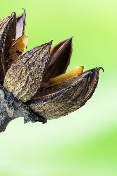 Nature4you soutient kokopelli semences libres de droit