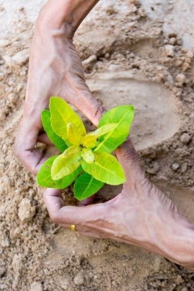 Planter et semer kokopelli nature4you