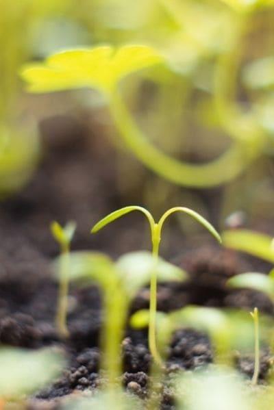 semences reproductibles kokopelli nature4you